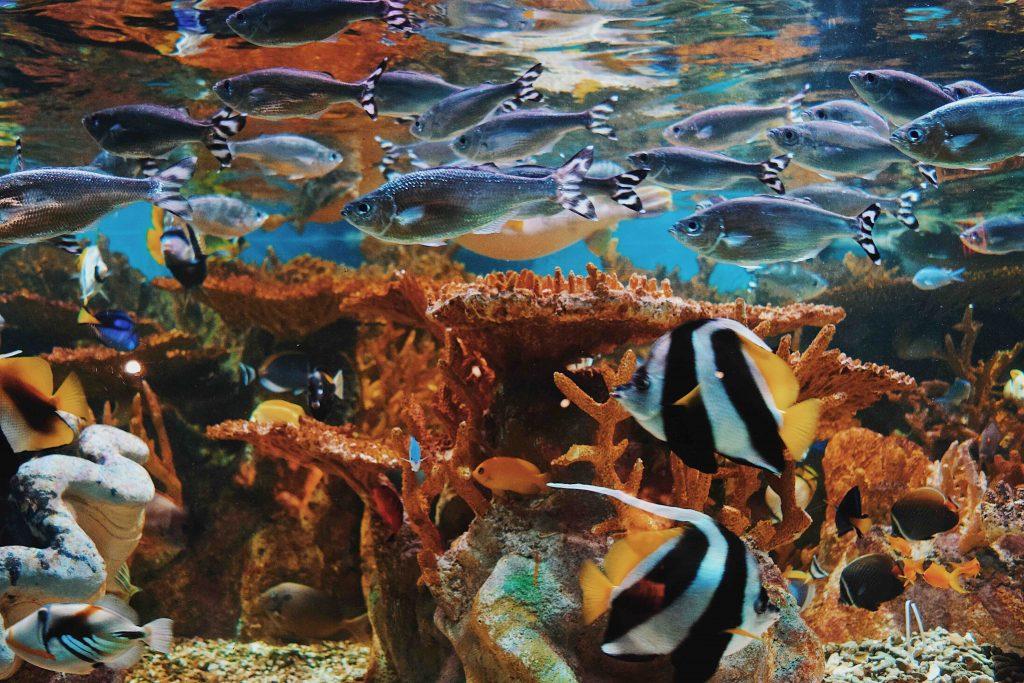 最も多くの生物が暮らす海