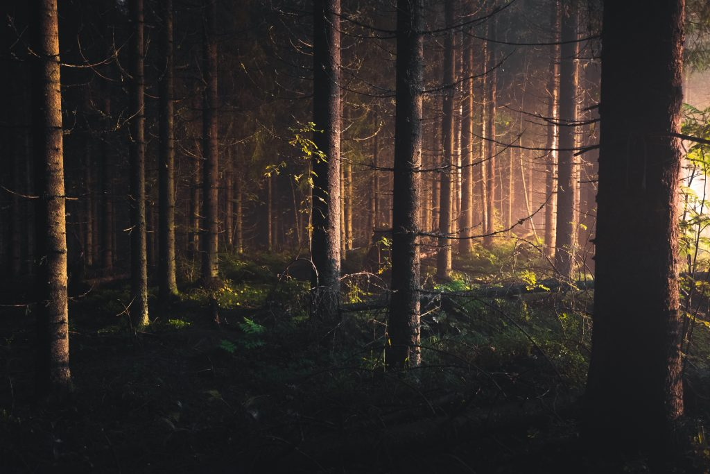 手入れされていない森